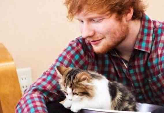 Má Taylor Swift datovania Ed Sheeran