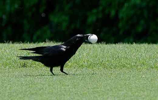 Co jíst, abych dostal velkého ptáka